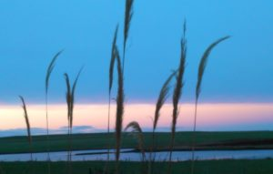 Winter pampas, Orkney, Gabrielle Barnby, Countrywoman's Diary, December, Christmas